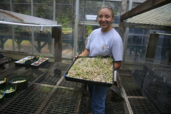 Youth Ranger with a tray of seedlings